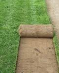 bahçe için hazır çim