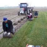hazır çim ekimi
