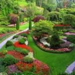 bahçe çiçek dizaynı